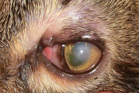 Auge, 14 Tage nach der Op, nach Entfernung der Spezialnaht